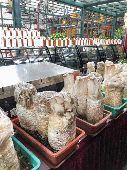 Boxes of mushrooms growing inside Huajia Yiyuan